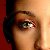 Gold Contacts Glimmer Black Amp Gold Contact Lenses